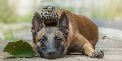 Dog and Owl 2